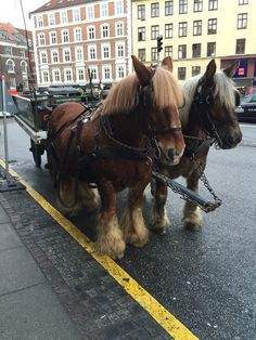 Carlsbergs beer horses. You Can still see them in the streets af Copenhagen. This photo was taken dec 14. 2014