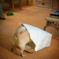 TyBeau loved shopping bags.