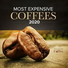 Expensive Coffee and Is It Worth It? Coffee Creamer, Coffee Coffee, Best Kona Coffee, Kopi Luwak Coffee, Civet Coffee, Jamaican Coffee, Blue Mountain Coffee, Coffee Counter, Coffee Review