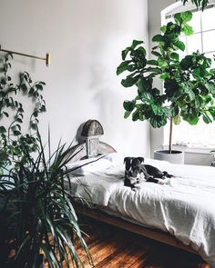 Hands up who loves a house plant? This home tour is for you ! Seriously, I've never seen so much beautiful greenery in one place, it takes...