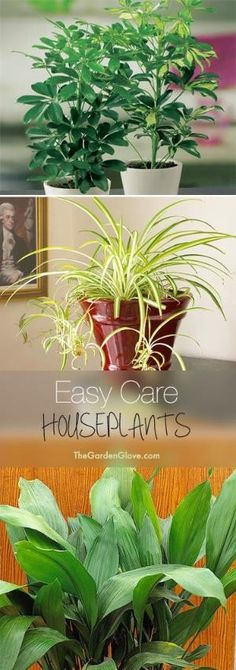 Easy Care Houseplants • Tips & ideas for easy to grow and hard to kill houseplants! by christi