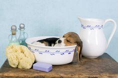 Como dar banho e arrumar seu cachorro em casa | eHow Brasil