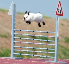 Photograph from a Bunny jumping contest in Germany.  Snoopy, shown here, was the winner.