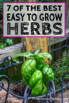 These herbs are great to cook with and really easy to grow in your garden even if youre a beginner. Find out all the tips to have a successful outdoor herb garden this summer.  #fromhousetohome #gardeningtips #gardenideas  #herbs
