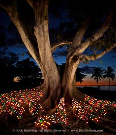christmas in naples florida - Google Search