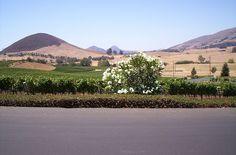 San Luis Obispo, California - vineyards on Orcutt Rd