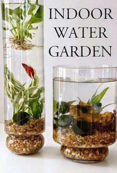 Indoor Water Garden #GardenWater