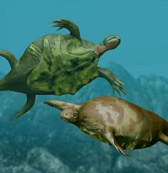 20 Important 'Firsts' in the Animal Kingdom: The First Turtle - Odontochelys