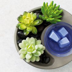 Little Garden Scentsy Warmer - The Candle Boutique - Scentsy UK. Scentsy Uk, Little Gardens, Wax Warmers, Faux Succulents, House Smells, Heating Element, Serving Bowls, Artisan, Candles