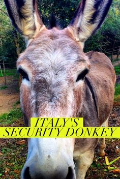A donkey in charge of security and marketing at a hotel in Italy? Click for this funny story of creative use of a donkey at an inn in Tuscany Italy.