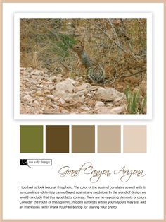 Wildlife influence: Camouflage color palette and interesting observation. Location: Grand Canyon, Arizona -mejudydesign.com