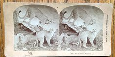 Stereoscope Stereoview 3D Photo Card 1870 Era by LeftoverStuff