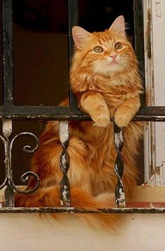 Poser - #Cats