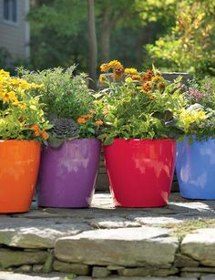 love, these will be perfect for the backyard. So bright and colorful!!