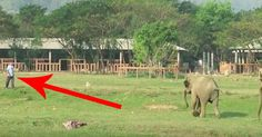 They say that elephants never forget, and I'm sure that's especially true when…