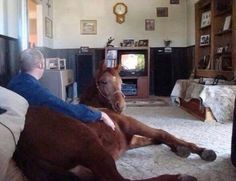 Just chillin with my horse. No biggie.