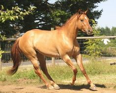 love red duns <3  won't one named  Sunset (sunie) if it's a boy or Madame Sunspot (Sunspot) if it's a girl