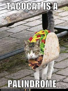 Never mind that Taco cat is two words, this is funny. Costumed cat + wordnerd humor = YaY! :D