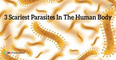 #Parasite #healthytips #health #human #body #organism #organ #hair #skin #cancer #nutrition #worm #contaminated #body
