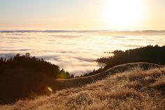 Marin County - natural beauty inspiration