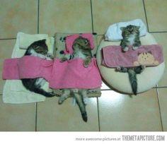 Kitty sleepover. LOL