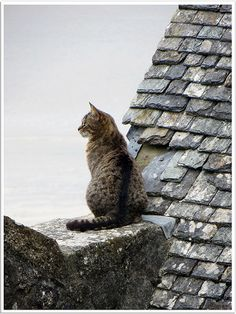 cat on the look out