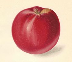 1911 Antique Apple Print Lithograph Book Plate Original San Jacinto Apple by catladycollectibles on Etsy