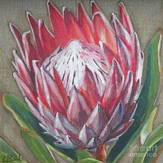 Protea Canvas Print / Canvas Art by Leigh Banks Acrylic Flowers, Oil Painting Flowers, Oil Painting Abstract, Abstract Flowers, Acrylic Art, Painting & Drawing, Watercolor Art, Flower Paintings, Pastel Drawing