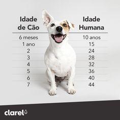 """Tem curiosidade em saber a idade """"humana"""" do seu amigo de quatro patas? Fique a conhecer aqui uma média de valores. :)"""