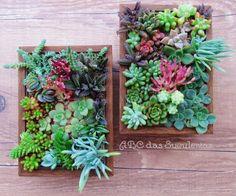 ABC of Succulents: PortaRetrato, PortaSuculentas in 3,2,1 ...