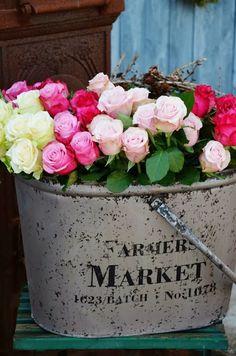 Roses  ✿‿✿ ✿⊱╮