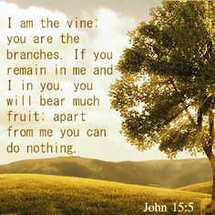 I am the vine: you are the branches. If you remain in me and I in you. You will bear much fruit: apart from me you can do nothing. #John15_5