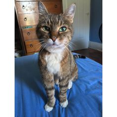 Last night I lost my best friend of 18 years. I love you forever my precious little Clover Bud. by swarren31 cats kitten catsonweb cute adorable funny sleepy animals nature kitty cutie ca