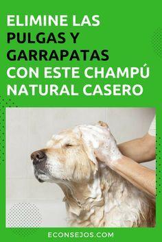 como eliminar piojos del perro con remedios caseros