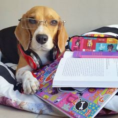 I'm studying for my masters in Beagleonomy