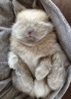 Funny pictures about Sleepy baby bunny. Oh, and cool pics about Sleepy baby bunny. Also, Sleepy baby bunny. Cute Creatures, Beautiful Creatures, Animals Beautiful, Cute Baby Animals, Animals And Pets, Funny Animals, Animals Images, Nature Animals, Wild Animals
