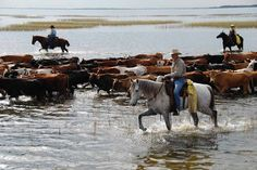 Florida's Last Frontier – Cowboys and Indians Magazine Cattle ranchers and conservationists are banding together to protect the northern Everglades in Florida. Rodeo Cowboys, Real Cowboys, Cowgirl And Horse, Cowboy Art, Cowgirl Pictures, Cowboy Ranch, Cattle Drive, Kissimmee Florida, Ranch Life