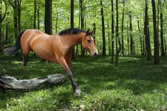 Bay horse jumping by on DeviantArt Bay Horse, Brown Horse, All The Pretty Horses, Equestrian, Bays, Animals, Deviantart, Lifestyle, Google Search