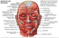 인체 해부학 1