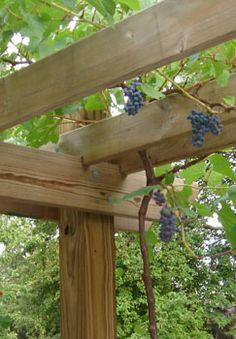 Custom Built Pergolas for Grapevines