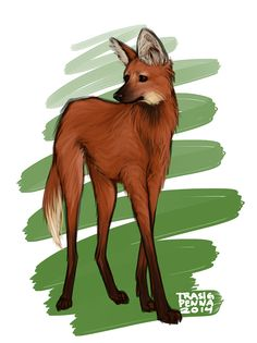 trasigpenna:   30 day challenge II Day 4 - An animal you think is really cute  I took this opportunity to draw a maned wolf, i adore them (´▽`ʃƪ)