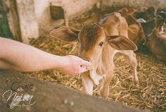 Estilo de vida: Vegetarianismo