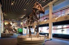 Philadelphia Museum of Natural Science
