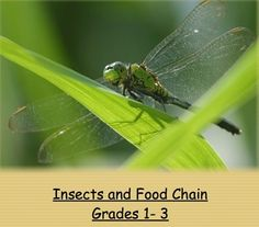 Insects and Food Chain Lesson Plan Science Lesson Plan Science Lesson Plans, Science Lessons, Teaching Science, Science Ideas, Teaching Resources, Beautiful Bugs, Nature Quotes, Free Stock Photos, Photo Editor