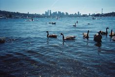 Seattle in the summer from gas works. Geese not guaranteed