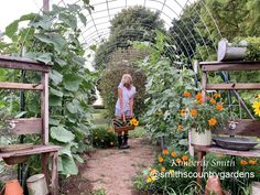 Grow cucumbers over cattle fence! Home & Garden Ideas Will Smith, Trellis, Cattle, Fence, Home And Garden, Outdoor Structures, Country, Garden Ideas, Plants