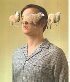 #insomnia #sheep | Photo-illustrations by C.J. Burton.