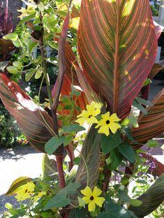 Fresh Ideas for Growing Cannas in Your Garden - Longfield Gardens Canna Lily Landscaping, Tropical Landscaping, Tropical Garden, Tropical Plants, Texas Landscaping, Landscaping Trees, Lawn And Garden, Summer Garden, Garden Park