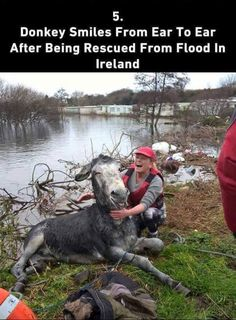 a little faith in humanity restored - Album on Imgur
