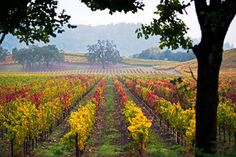 iconic wine country - Google Search